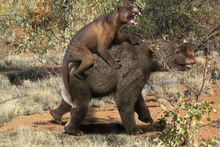 Thylacoleo Attacking a Diprotodon