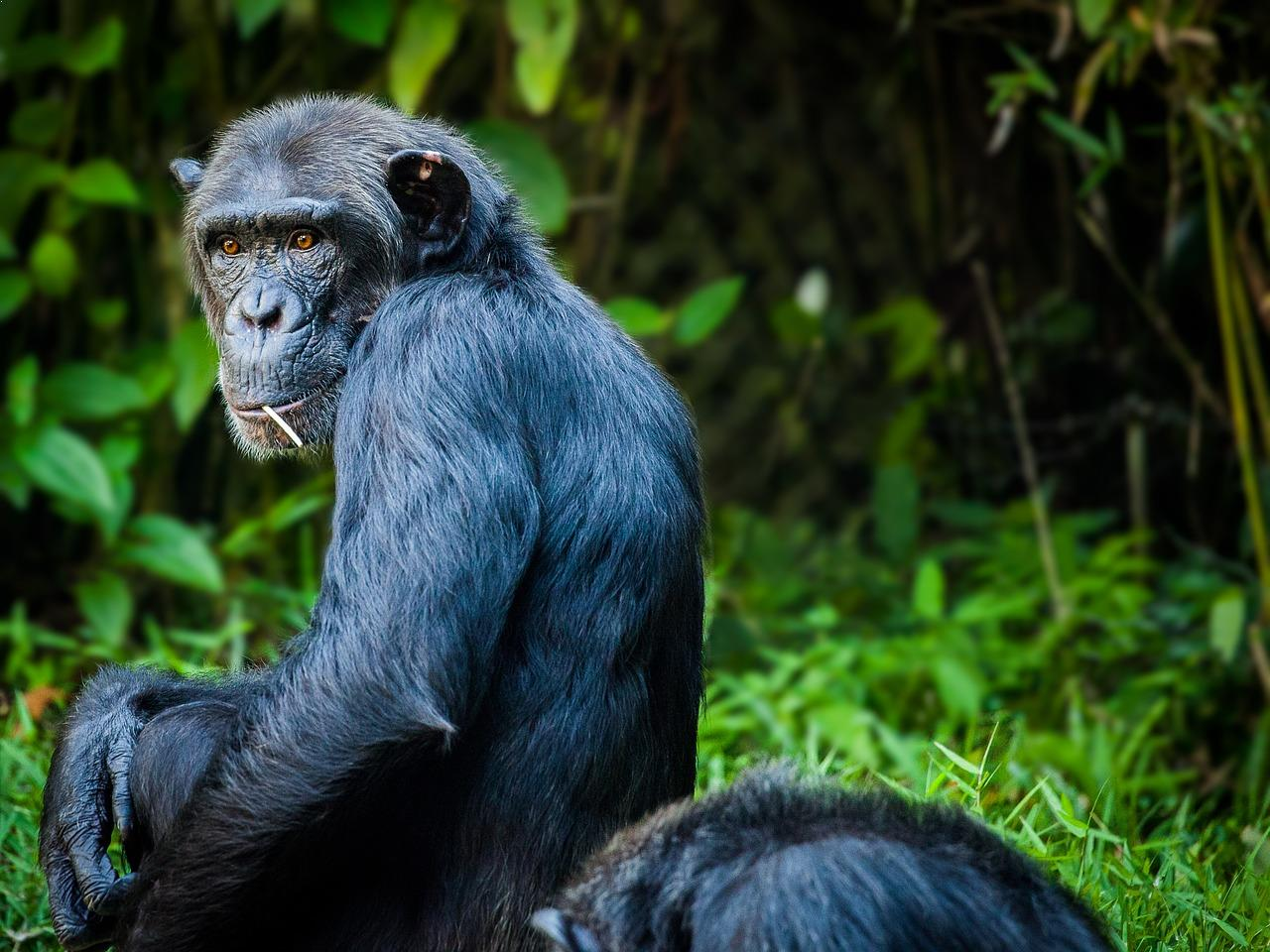 What creatures can be considered the most intelligent on the planet