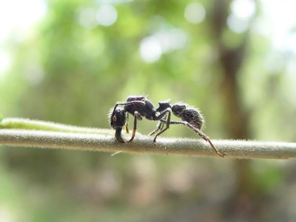 Amazon Rainforest Animals