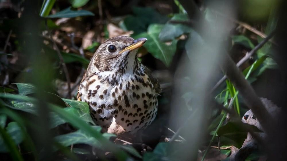 Best Singing Birds