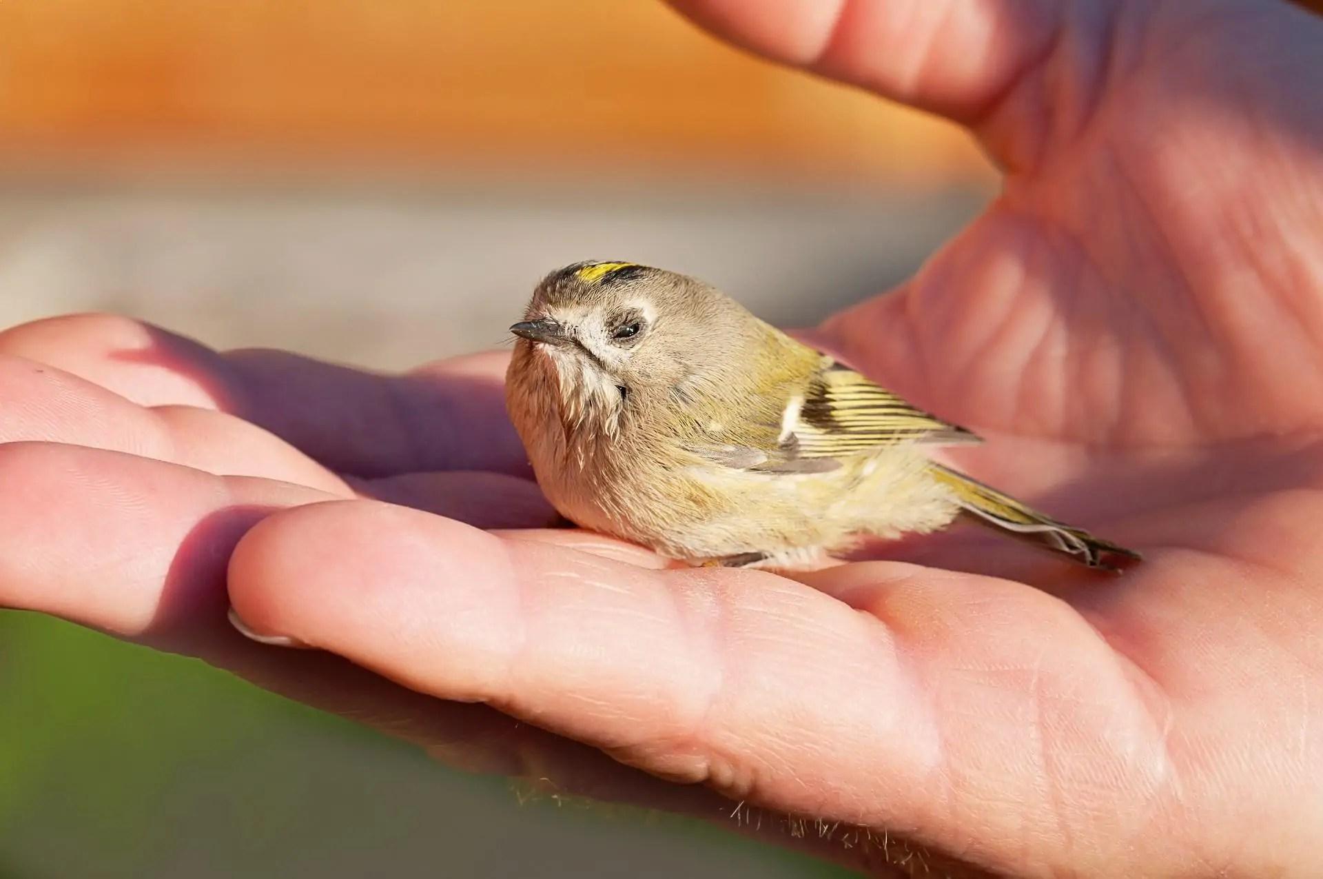 Bird Auf Deutsch