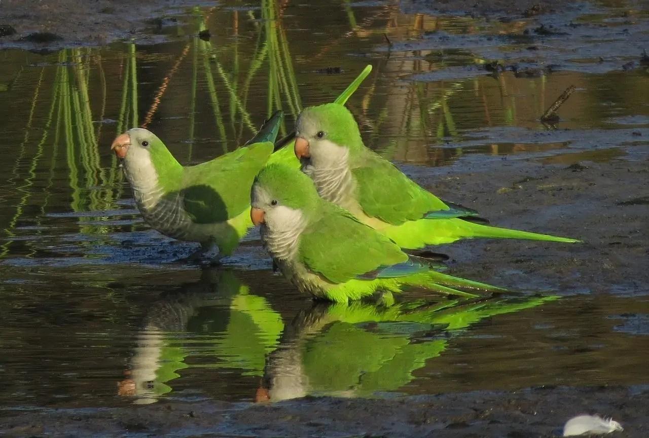 top 10 smartest talking birds in the world
