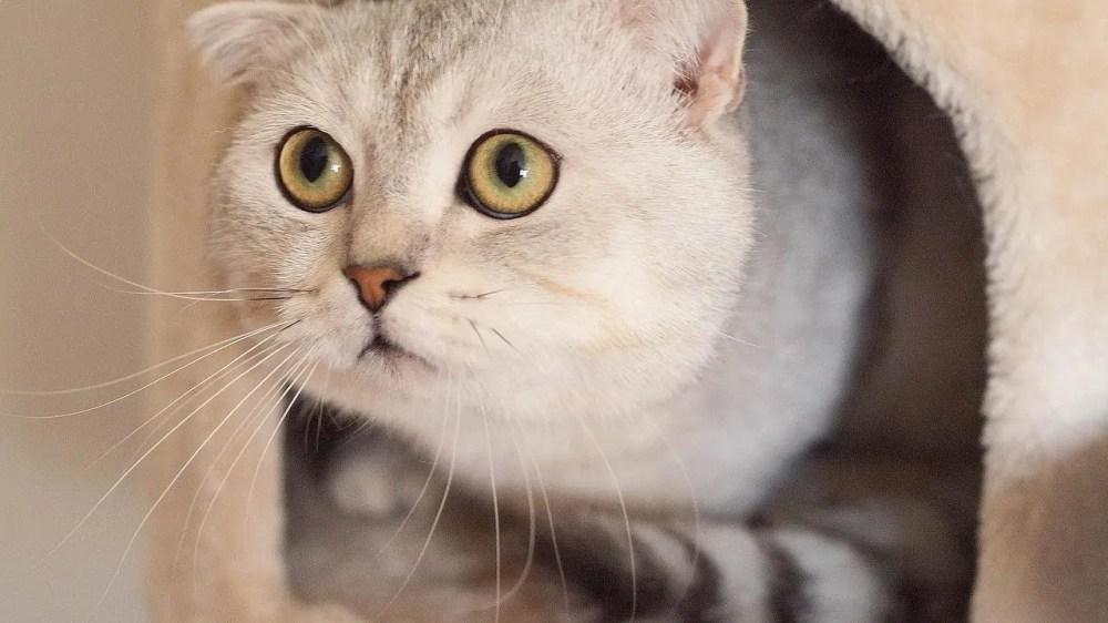Beautiful Cat Breeds