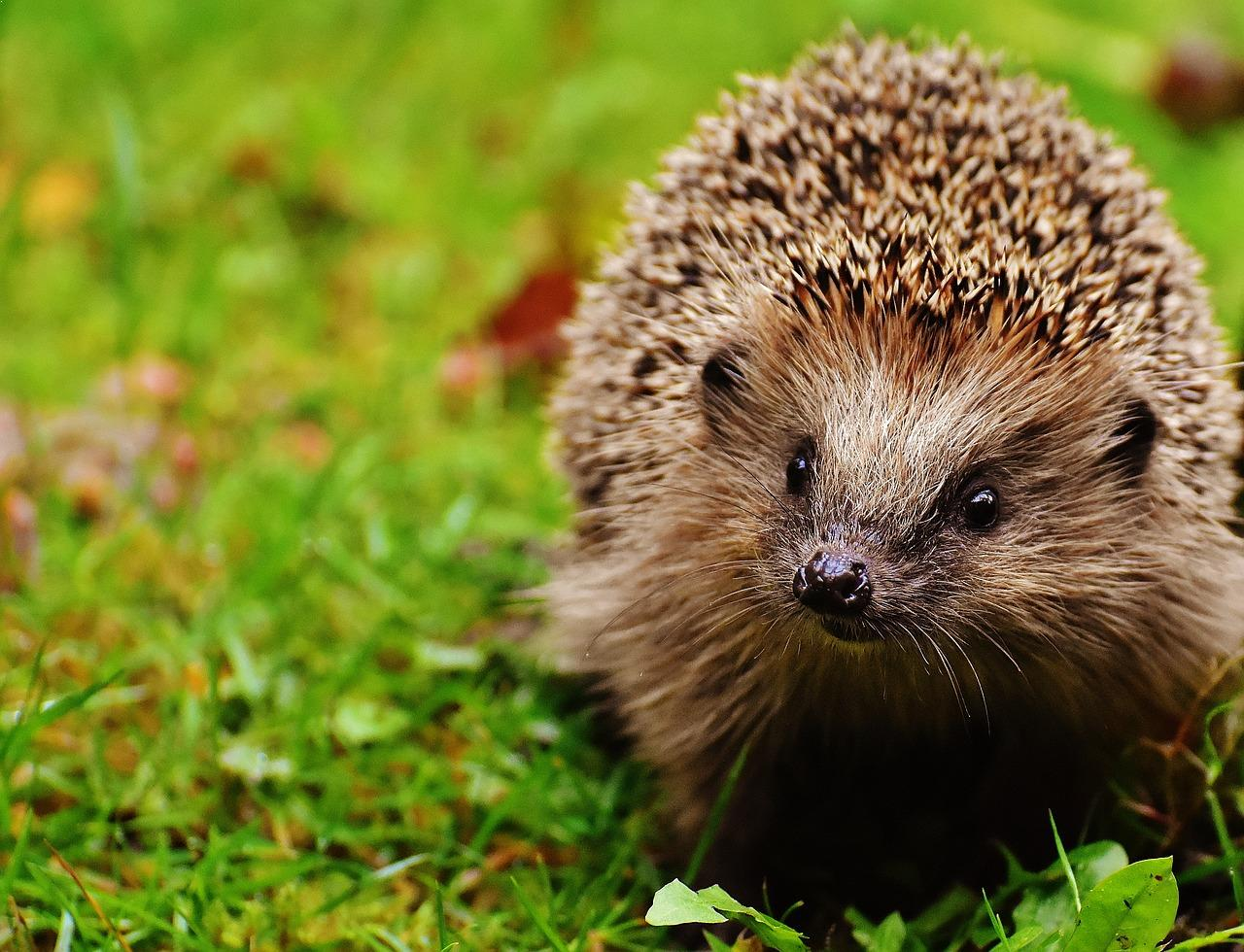 The cutest animals in the world: list, description and interesting facts 93