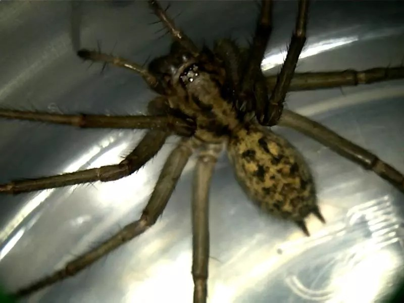 Top 10 Scariest Spiders in the World