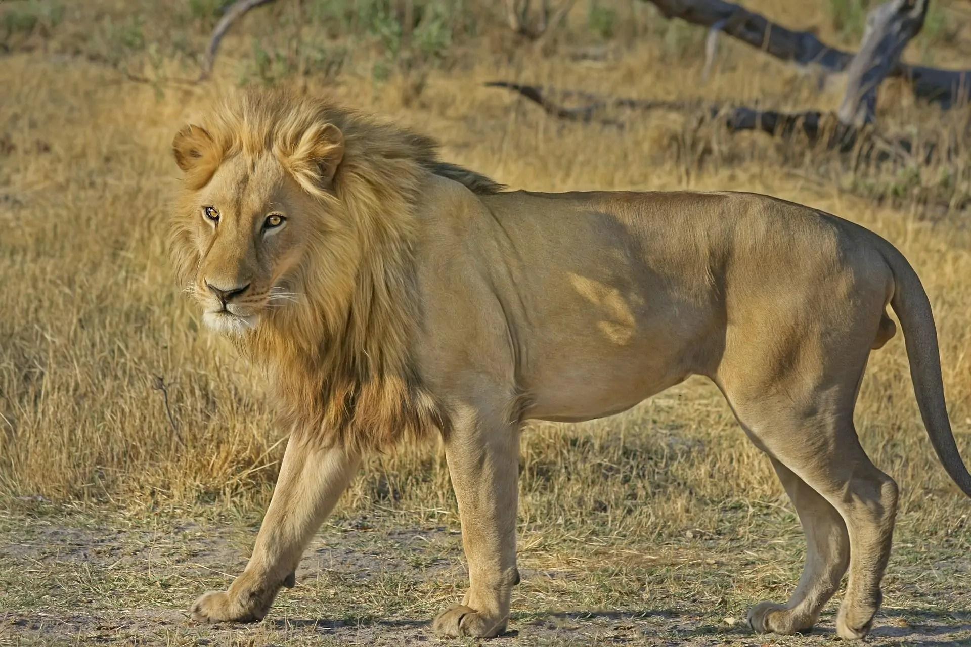 Top 10 Best Land Animals
