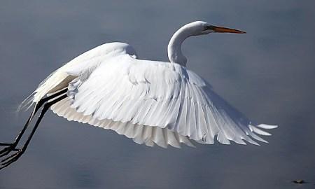 White Birds