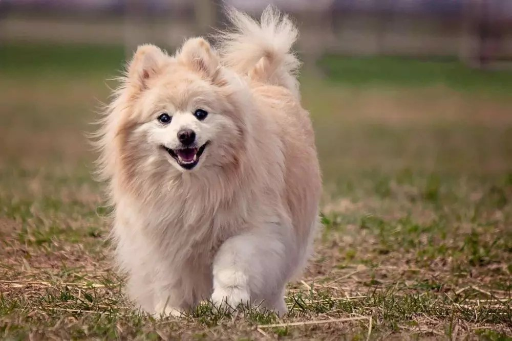 Top 15 Small Dog Breeds In The World