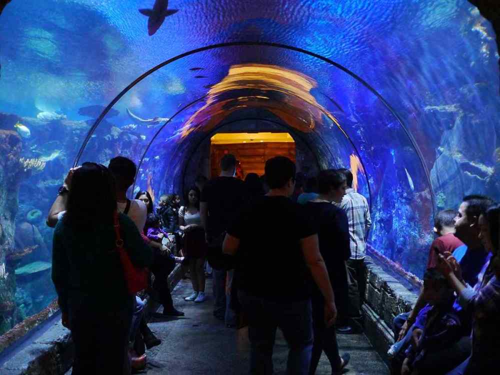 Shark Reef Aquarium, Mandalay Bay