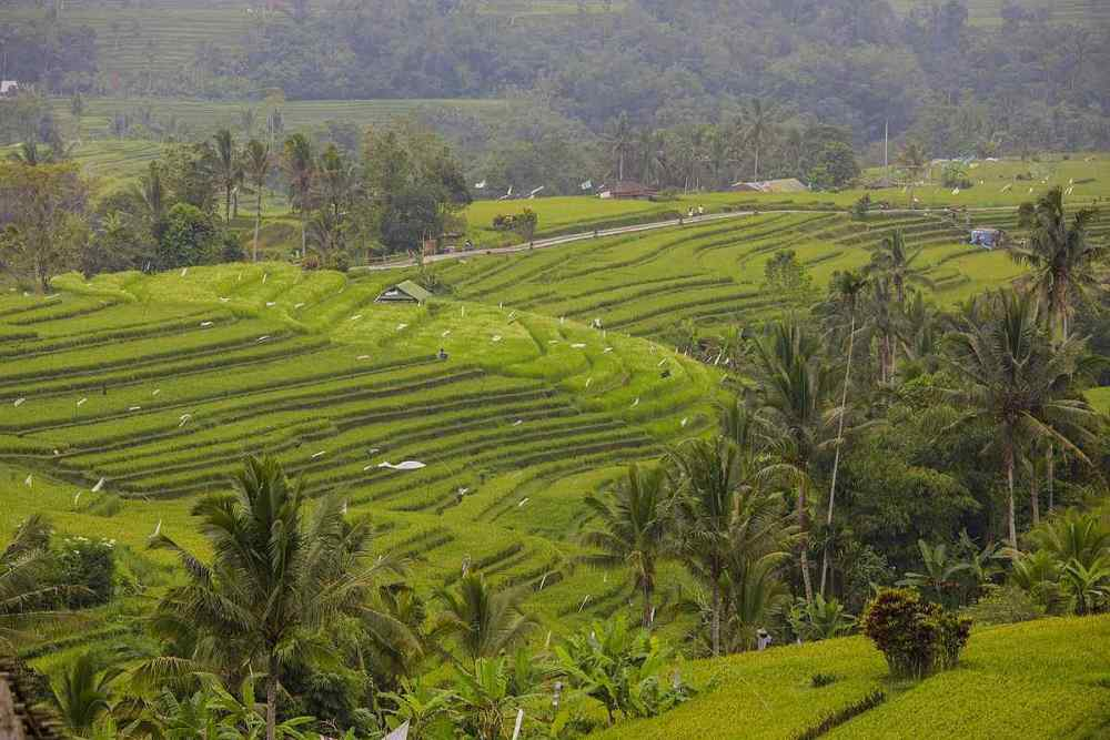 Bali rice terraces, Indonesia