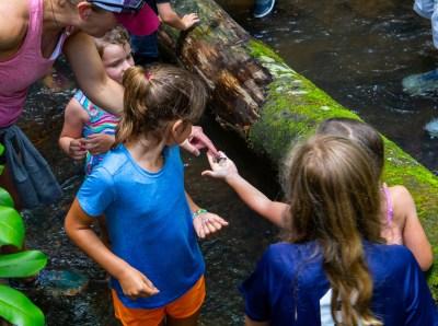 creek hike, outdoor education