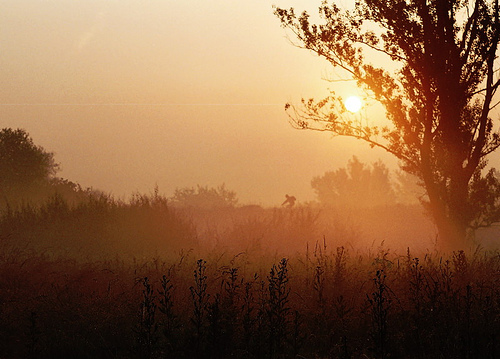 A foggy orange scene with trees below and the sun through the fog above.
