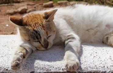 160427 cats Morocco (1)