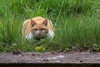 160619 welsh cats (9)