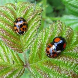 160809 ladybird (2)