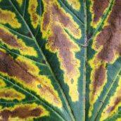 160912-autumn-leaves-1