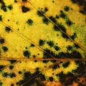 160912-autumn-leaves-8