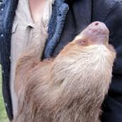 161020-international-sloth-day-1