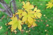 161101-golden-autumn-6