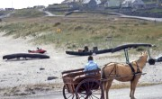 Revegetated plot from pierhead. Jaunting cart 2006