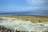 Plane landing on ungrazed airstrip, Inisheer