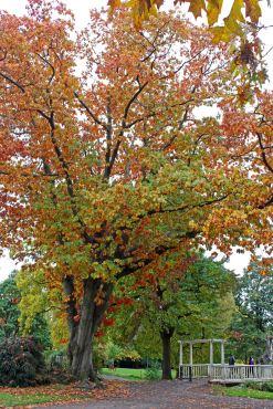 161113-roath-park-autumn-3