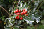 161217-christmas-tree-7