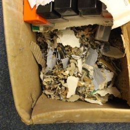 170304-mouse-nest-2