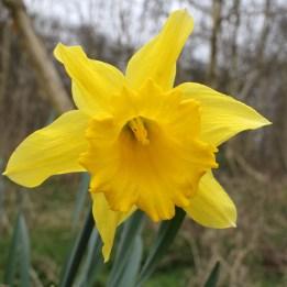 170318 Spring in Bute Park (4)