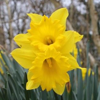 170318 Spring in Bute Park (5)