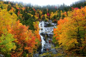 5b946dc40e754a748b1c6be088ade8ca 3 Is Fall Foliage Compromised Due To Climate Change?