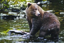 Bear Anan Creek USFS 225x150 Wild & Wooly