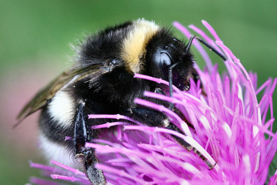 bee 400x267 Death by a Thousand Cuts