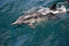 dolphin sml 1 225x150 Earthtalk Q&A