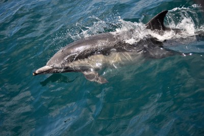 dolphin sml 1 400x267 Underwater Noise Pollution Threatens Marine Wildlife, Ecosystems