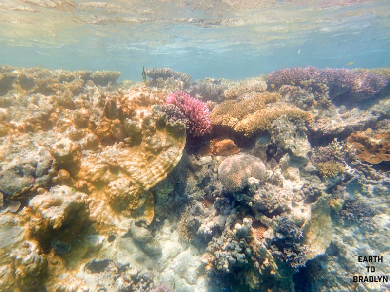 The beautiful coral that is slowly disappearing as sea level and temperatures change.