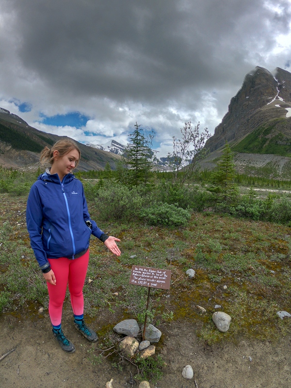 This sign shows where the glacier was in 1911!