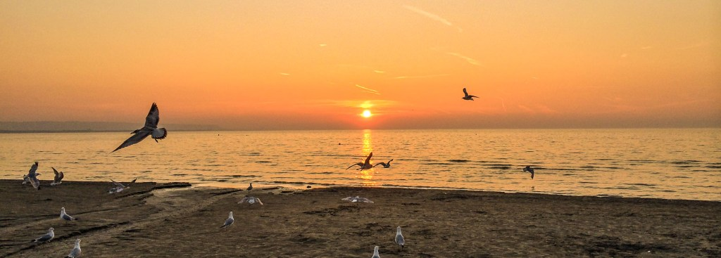 Picture of sea gulls at Wasaga Beach at sunset.