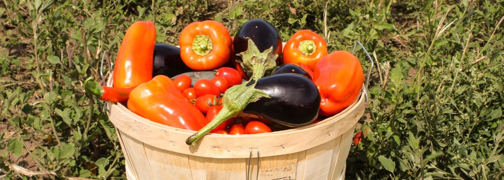 Picture of a basket of tomatoes, peppers and aubergines from a food and wine festival.