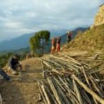 Earth and bamboo