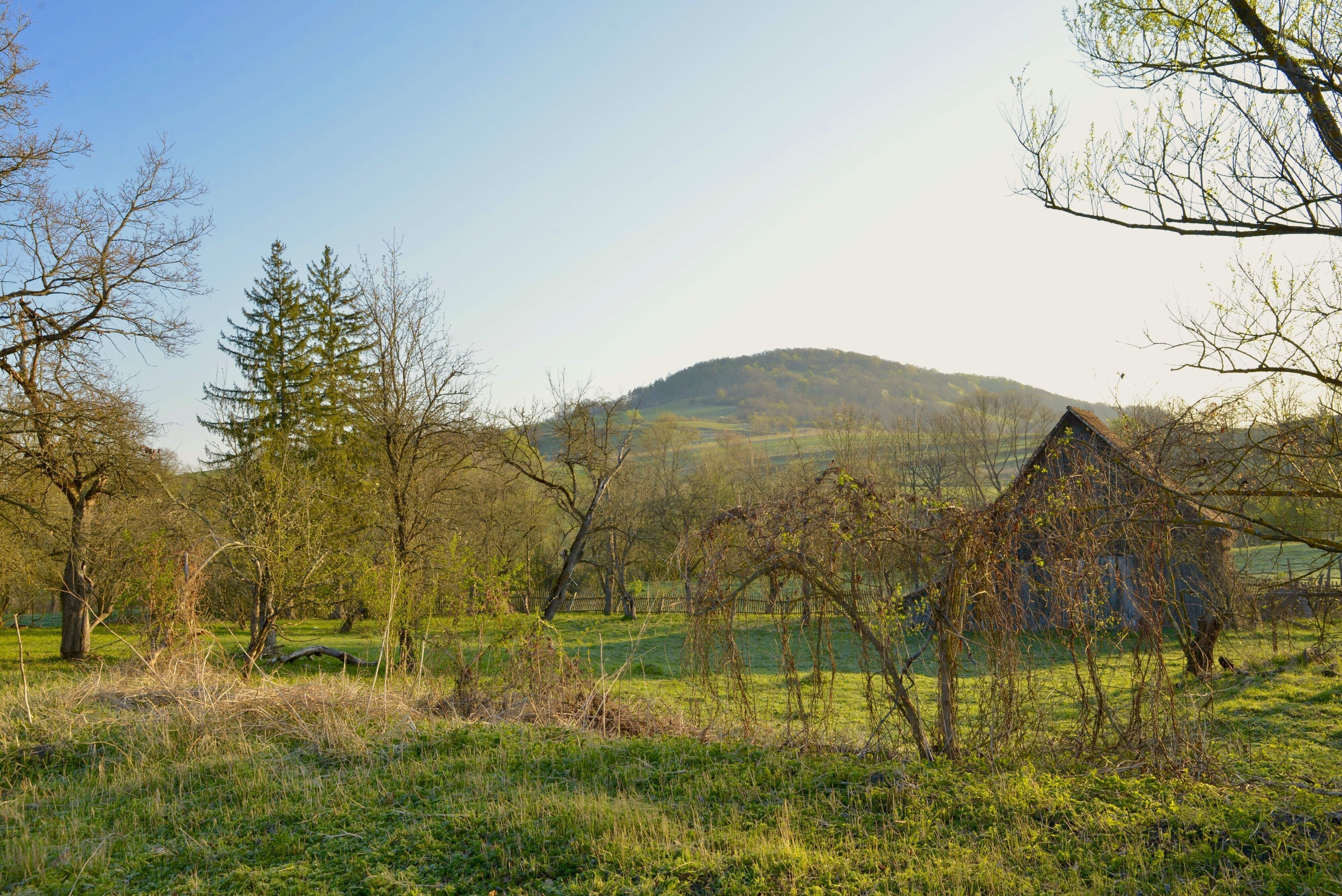 Orchard and Hills Beyond