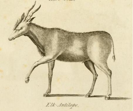 salt Elke-Antilope.png