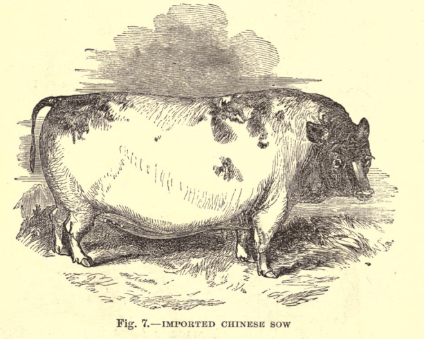 pig 2.10.png