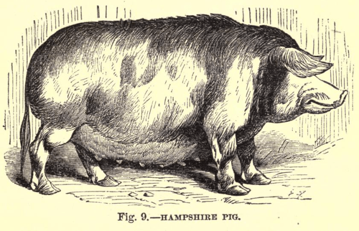 Pig 2.5.png