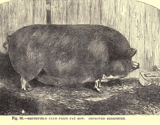 pig 2.8.png