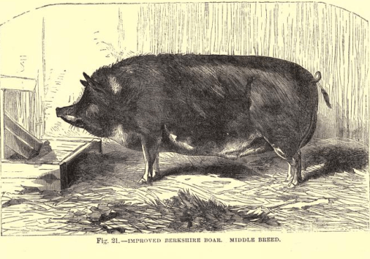 pig 2.9.png