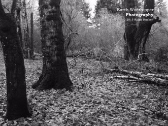 Oregon Winter