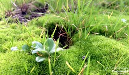 Moss Life