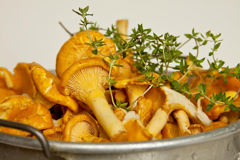 Fresh Chanterelle Mushrooms in Colander