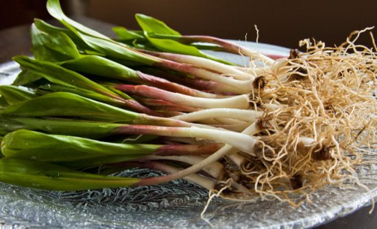 Fresh Ramps and Roots